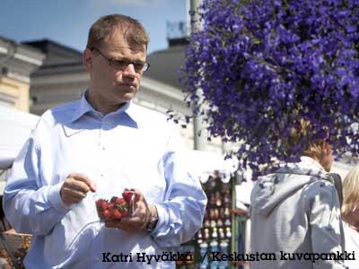 pääministeri Juha Sipilä (kesk) syö mansikoita torilla tuulen helliessä hiljaa ruiskukkia