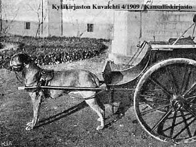 koira valjastettuna kärryn eteen Kyläkirjaston Kuvalehden kuvassa vuonna 1909