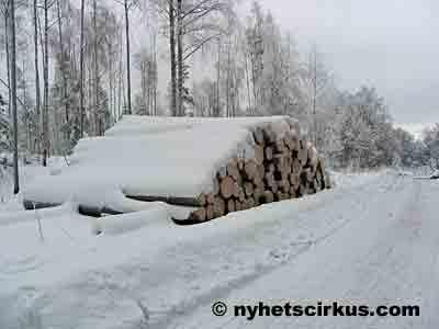 puupino lumisen tien varressa