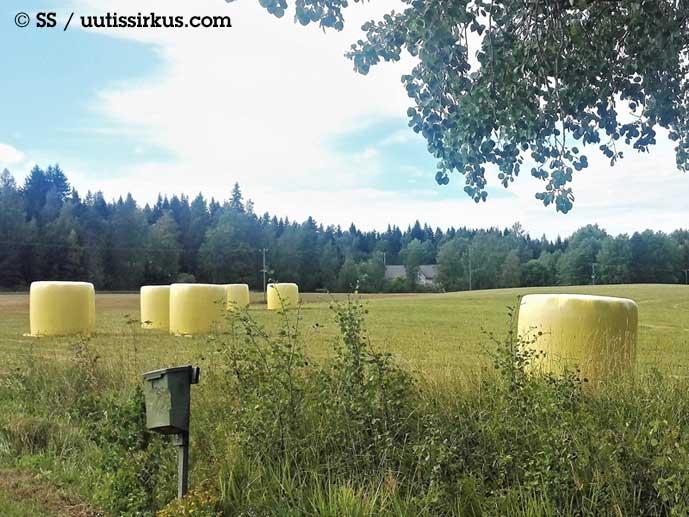 keltaisia tuorerehusäkkejä pellolla