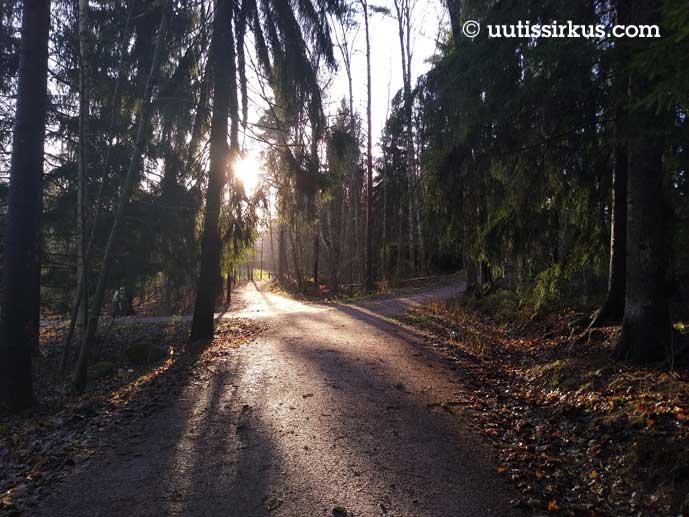 kävelyteiden risteys tuuheiden kuusien alla, aurinko paistaa matalalta edestä tien suunnasta