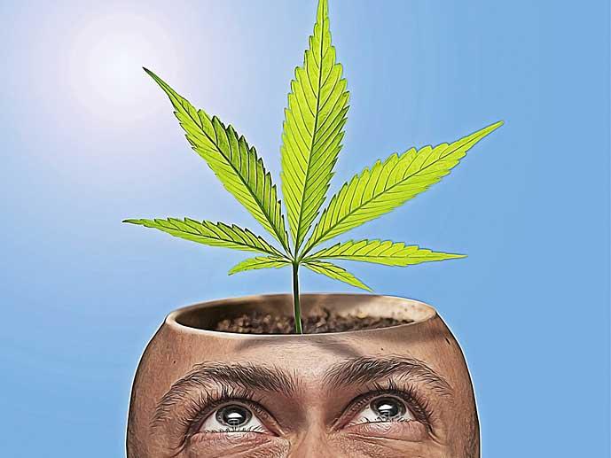 karikatyyri: miehen ruukunmuotoisesta päästä kasvaa kannbiksenlehti